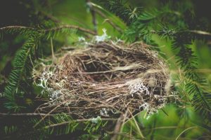 Picture of a bird nest